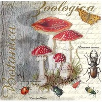 FLY AGARIC AND BEETLE, Ambiente