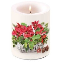 POINSETTIA IN BASKET , Ambiente