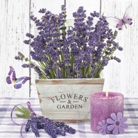 LAVENDER IN A WOODEN POT, Daisy